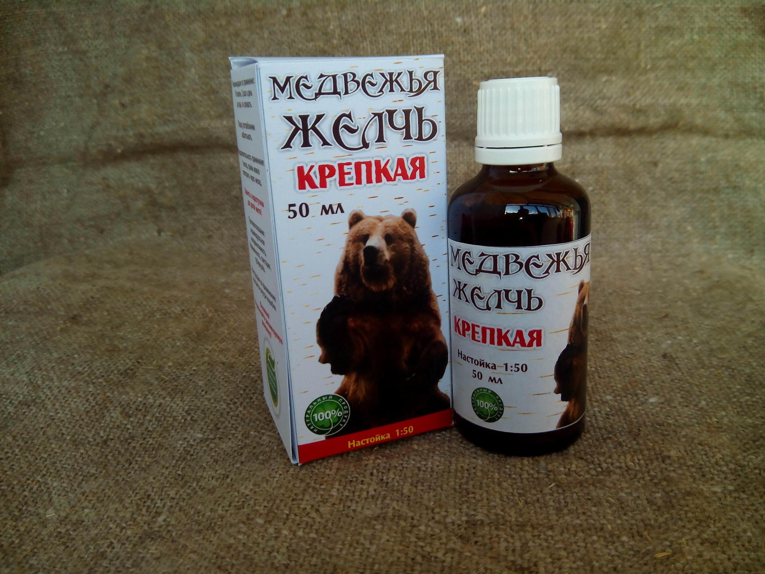 Медвежья желчь: применение и приготовление настойки из